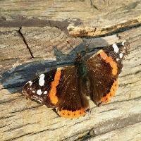 Butterfly_Palundu_Profilbild