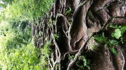 beeindruckender Waldweg