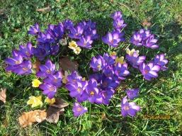 Frühlings Wanderung im Isental