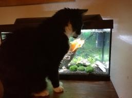 Fisch aus der Dose kann jeder...