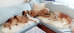 Odie und Snoopy chillen..Frauerl näht :)