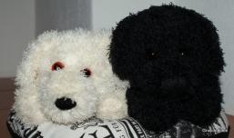 Flocke und Blacky