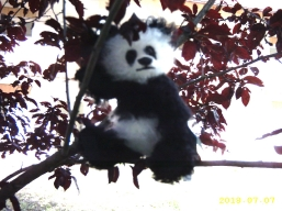 Panda auf dem Baum