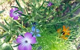 Sommerblumen aus Seedballs