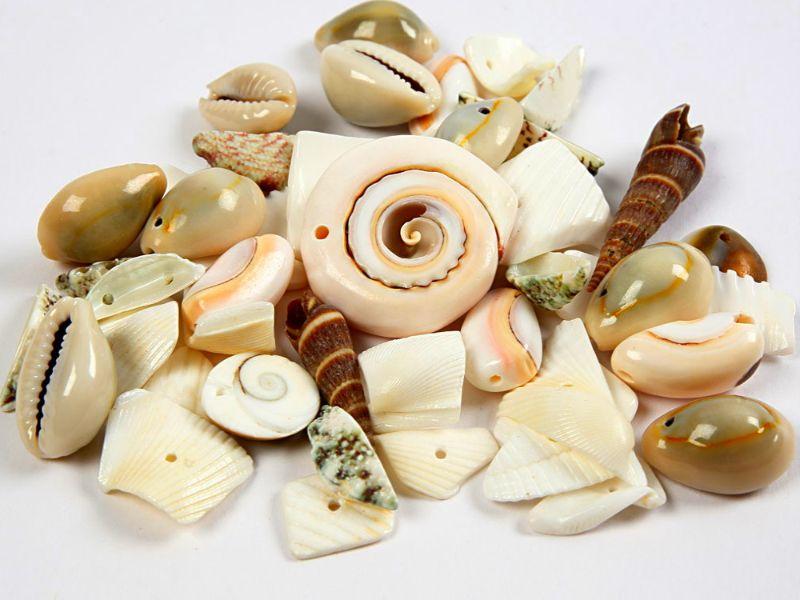 Kleinesbild - echte Muscheln, Muschel-Perlen zum fädeln, Schmuckherstellung, Natur, Stand, Meer, Ozean, Armband, Ketten