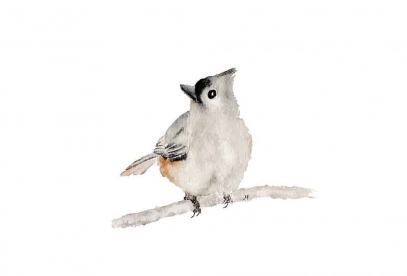 Kleinesbild - Fine Art Print vom Originalen Aquarell Vogel