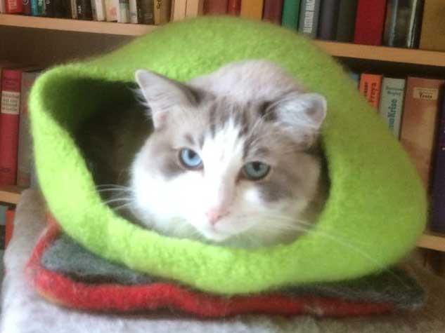 - Katzenhöhle aus Schafwolle Strickfilz apfelgrün, waschbar - Katzenhöhle aus Schafwolle Strickfilz apfelgrün, waschbar