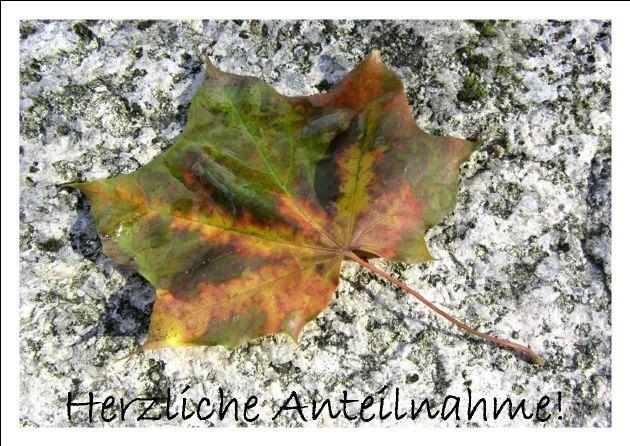 Kleinesbild - Beileidskarte Ahornblatt auf Stein fotografiert und gedruckt auf Fotopapier mit dem Schriftzug Herzliche Anteilnahme