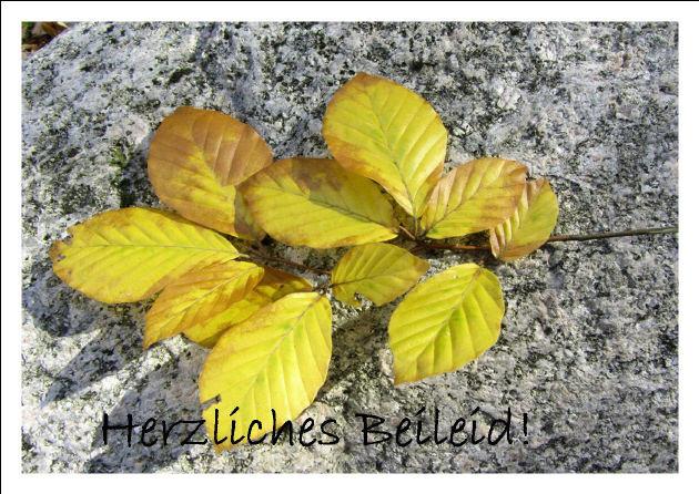 Kleinesbild - Beileidskarte Buchezweig auf Stein fotografiert und gedrickt auf Fotopapier mit dem Schriftzug Herzliches Beileid