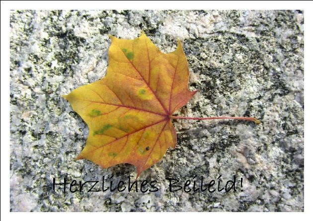 Kleinesbild - Beileidskarte Ahornblatt auf Stein fotografiert und gedruckt auf Fotopapier mit dem Schriftzug Herzliches Beileid