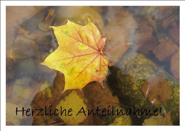 Kleinesbild - Beileidskarte Ahornblatt auf Wasser fotografiert und gedruckt auf Fotopapier mit dem Schriftzug Herzliche Anteilnahme