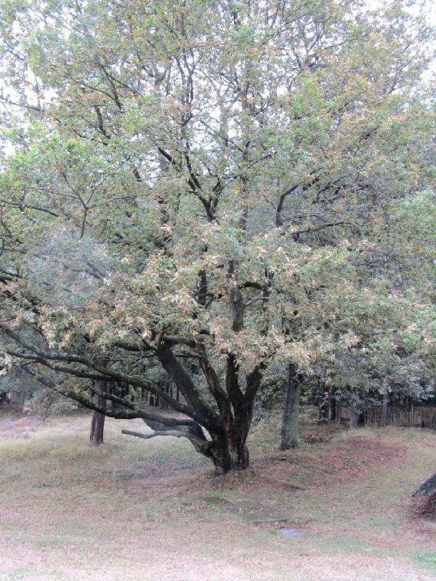 - Grußkarte Faltkarte Eichenbaum fotografiert und gedruckt auf Fotopapier kaufen - Grußkarte Faltkarte Eichenbaum fotografiert und gedruckt auf Fotopapier kaufen