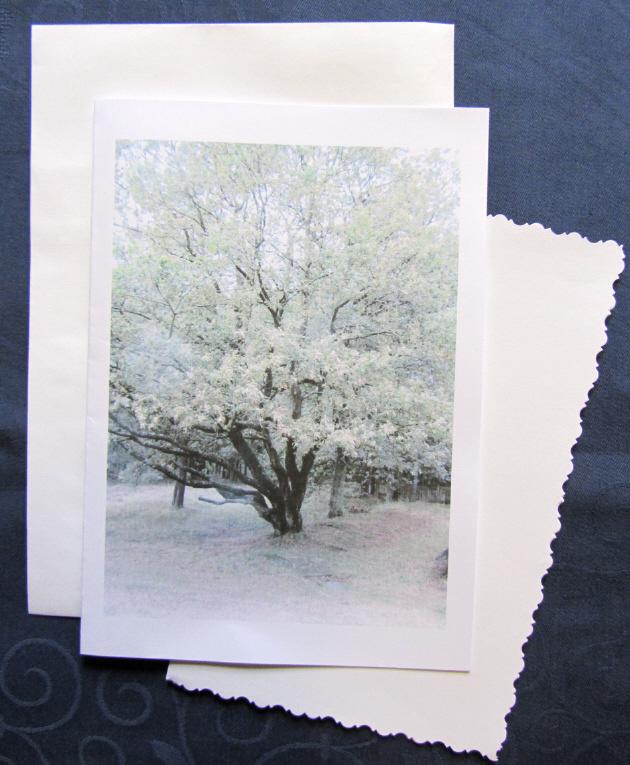 Kleinesbild - Grußkarte Faltkarte Eichenbaum fotografiert und gedruckt auf Fotopapier kaufen