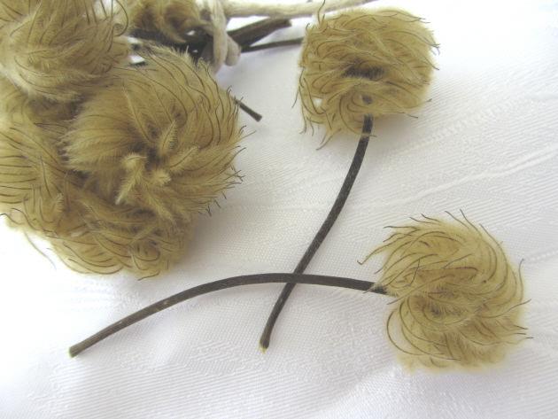 Kleinesbild - Blütenstände ☀ einer Clematispflanze zum Dekorieren von Gestecken oder als Tischdekoration bestellen