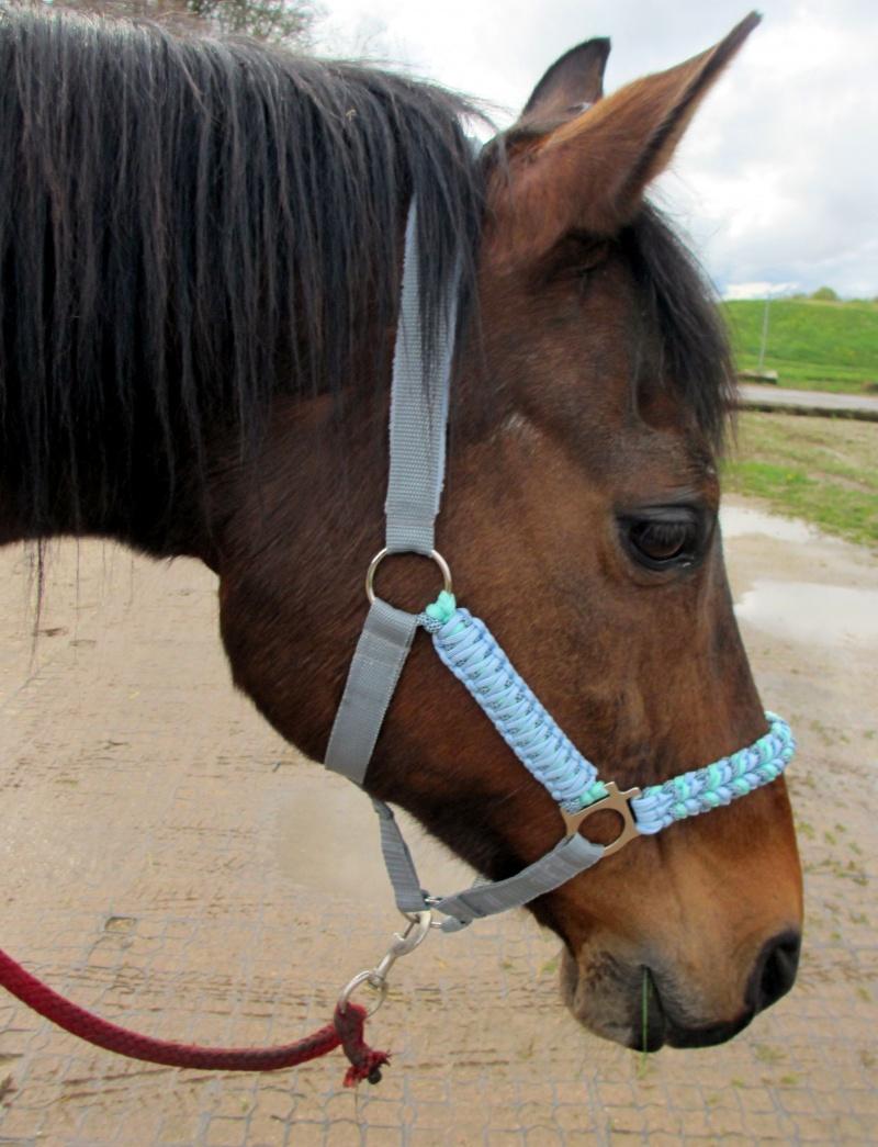 Kleinesbild - Pferdehalfter Ice Blue handgefertigt handgemacht Stallhalfter Reithalfter geflochten Paracord Flechthalfter Halfter Pferd Größe Shetty Pony Vollblut Warmblut