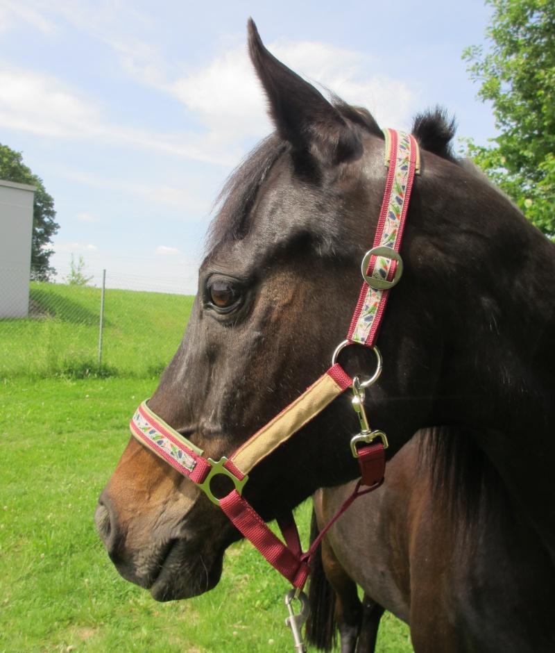 Kleinesbild - Pferdehalfter Kleine Feder rot handgemacht Stallhalfter/Reithalfter Halfter Pferd Größe Shetty Pony Vollblut Warmblut Kaltblut