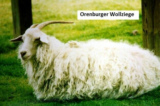 Kleinesbild - Mischung aus 50% Orenburg-Ziegen-Wolle und 50% Merinowolle,100% Natur, vegan, grau-blau, aus Russ. Föderation, Knäuelgewicht 50 Gramm /  225 Meter