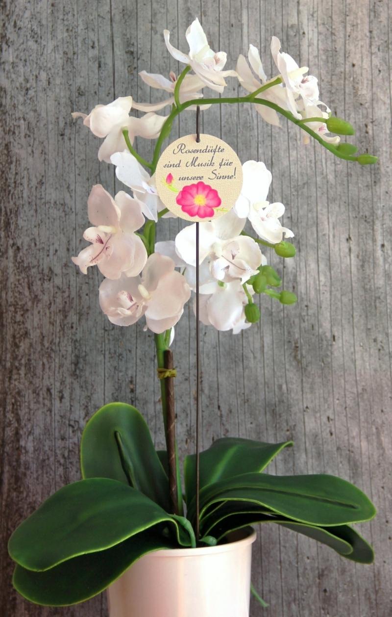 Kleinesbild - Blumenstecker Poesie3 von ZWEIFARBIG Heckenrose mit Spruch Blumenschmuck homedeko Geschenk Dekoration Geburtstag Valentinstag Hochzeit