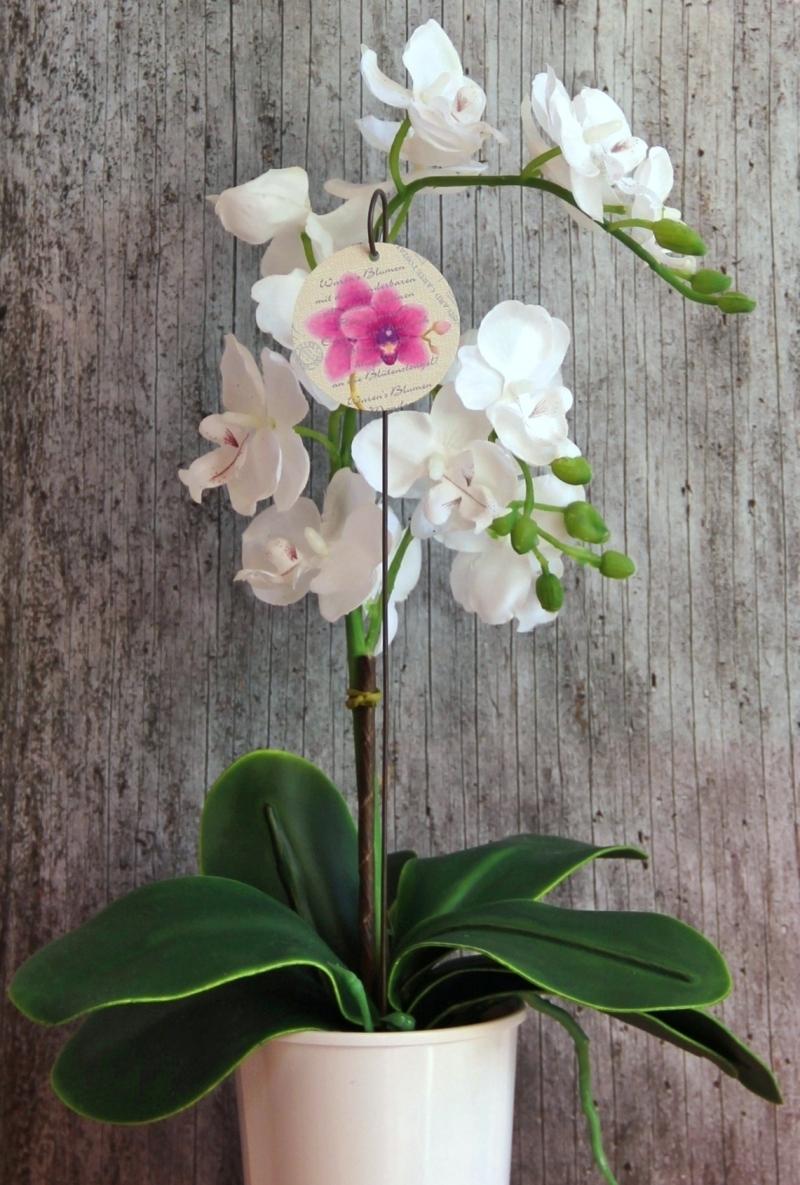 Kleinesbild - Blumenstecker Poesie10 von ZWEIFARBIG Orchidee Blickfänger Blumenschmuck homedeko Geschenk Dekoration Geburtstag Umzug