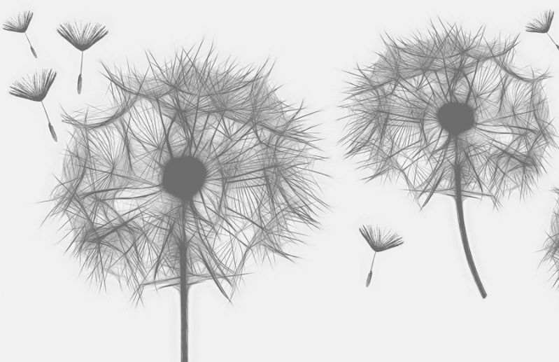Kleinesbild - Wandbordüre - selbstklebend | Pusteblume - 12 cm Höhe | Vlies Bordüre mit zarten Pusteblumen