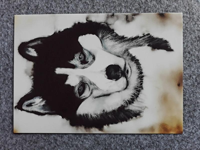 - Postkarte mit einem Huskymotiv  - Postkarte mit einem Huskymotiv