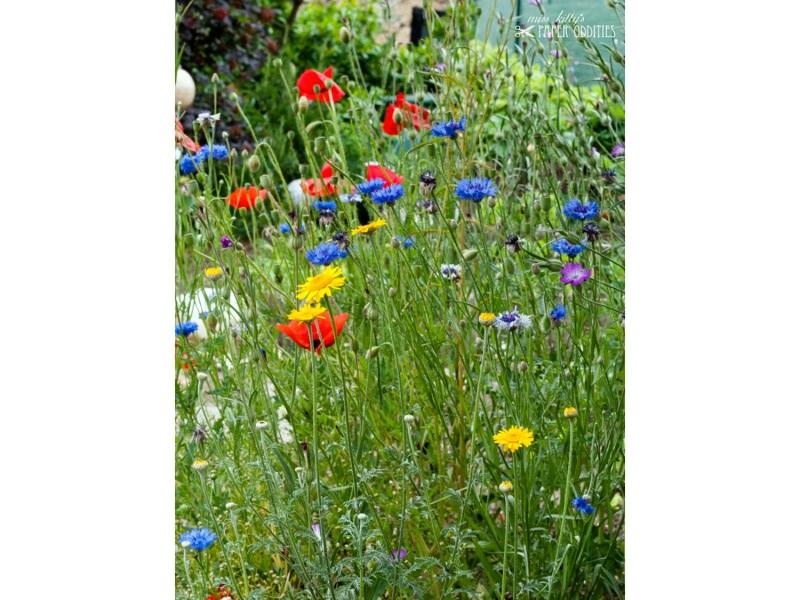 Kleinesbild - Postkarte »Wegen der Sache mit den Blumen und den Bienen...«, gefüllt mit Wildblumensamen