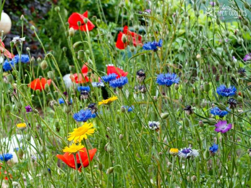Kleinesbild - Postkarte »Bunt ist das Dasein und granatenstark«, gefüllt mit Sommerblumensamen
