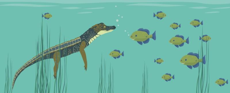 """- 3-schlägige Wandschablone """"Alligator mit Fischen"""" (56 x 21 cm) für das Kinderzimmer - 3-schlägige Wandschablone """"Alligator mit Fischen"""" (56 x 21 cm) für das Kinderzimmer"""
