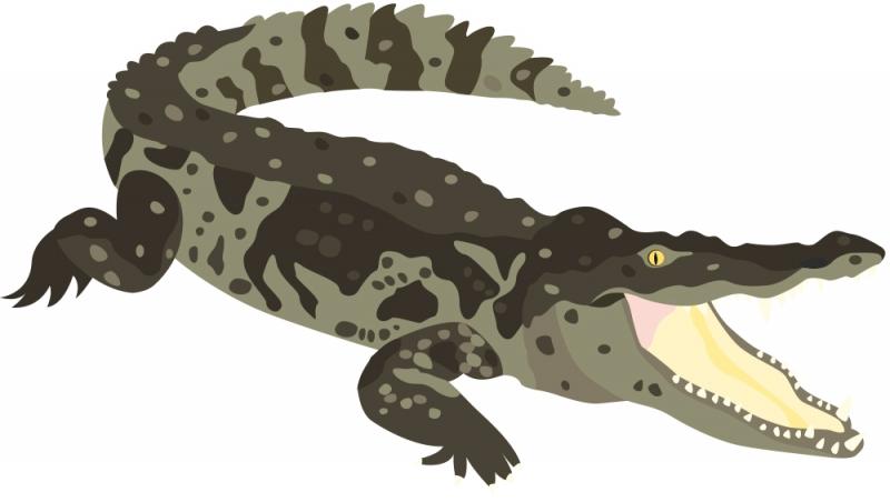 """- 3-schlägige Wandschablone """"crocodile"""" (42 x 30 cm) für das Kinderzimmer - 3-schlägige Wandschablone """"crocodile"""" (42 x 30 cm) für das Kinderzimmer"""