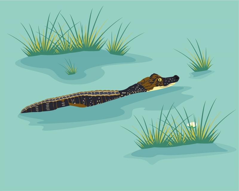 """- 3-schlägige Wandschablone """"Freshwater crocodile"""" (60 x 44 cm) für das Kinderzimmer - 3-schlägige Wandschablone """"Freshwater crocodile"""" (60 x 44 cm) für das Kinderzimmer"""
