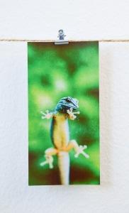 Gecko Eidechse Foto Photo XXL Postkarte 11 x 22 cm