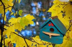 Vogelhaus, Nistkasten, blau
