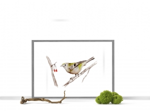 Fine Art Print vom Originalen Aquarell Vogel mit Beeren - Handarbeit kaufen