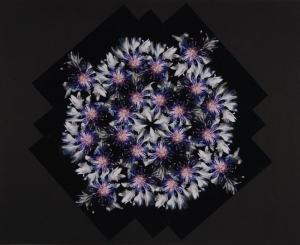 Fotocollage Handgemachte Kunst aus Fotos Unikat Blumen Natur Bilder  - Handarbeit kaufen