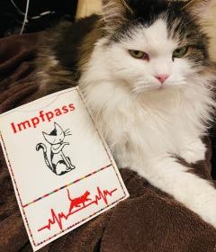 Impfpass Ausweis  für Katze Gestickt auf Kunstleder mit Katze treuen Blick  (Kopie id: 100269281) - Handarbeit kaufen