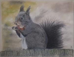 Eichhörnchen - Realistische Farbstiftzeichnung auf PastelMat Papier kaufen