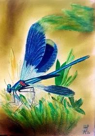 Realistische Blauflügel - Prachtlibelle,  Farbstiftzeichnung mit Caran d'ache luminance und Faber Castell Albrecht Dürer Aquarellstiften auf PastelMat 24 x 29,9 cm zu kaufen - Handarbeit kaufen