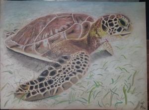 Realistische Zeichnung einer Riesenschildkröte, gezeichnet mit Pan Pastel, Caran d'ache luminance und Faber Castell Albrecht Dürer Aquarellfarbstiften auf PastelMat Papier Claire F - Handarbeit kaufen