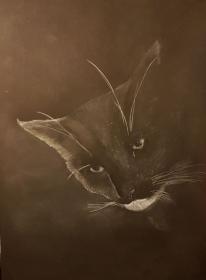 Black and White, Ausdrucksstarke Kohlestiftzeichnung eines Katzenportraits, gezeichnet auf schwarzem Mixed Media Papier, Größe DIN A3, zu kaufen - Handarbeit kaufen