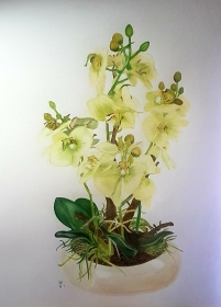 Orchidee. Farbstiftzeichnung einer Orchideenpflanze mit Caran d'ache luminance und Faber Castell Albrecht Dürer Aquarellstiften auf Mixed Media Papier. Größe des Bildes DIN A3. Zu
