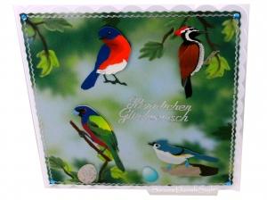 Geburtstagskarte für Ornithologen, Vogelliebhaber, mit verschiedene Vögel, ca. 15 x 15 cm