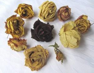 Rosenblüten getrocknet zum dekorieren von Kränzen Windlichtern oder als Tischdekoration kaufen