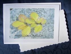 Beileidskarte Buchezweig auf Stein fotografiert und gedrickt auf Fotopapier mit dem Schriftzug Herzliches Beileid