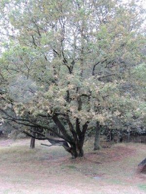 Grußkarte Faltkarte Eichenbaum fotografiert und gedruckt auf Fotopapier kaufen