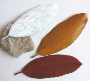 Pflanzenblätter einer Rhodedendronpflanze handgefärbt bestellen