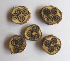 Knöpfe handgefertigt aus Holz mit eingebranntem Muster bestellen