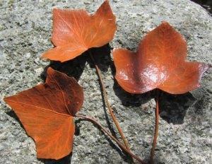 Efeublätter mit sichtbarer Blattmaserung handgefärbt in der Farbe Orange bestellen