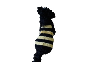 ♡ Hundesweater Biene ♡ amigoll9 ♡ Deko ♡ Handarbeit ♡