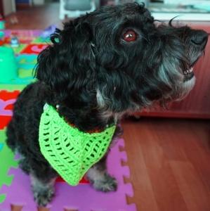 ♡ Hundehalstuch neon grün♡ amigoll9 ♡ Deko ♡ Handarbeit ♡