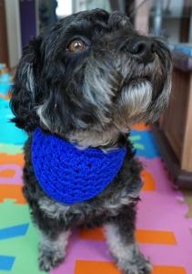 ♡ Hundehalstuch blau ♡ amigoll9 ♡ Deko ♡ Handarbeit ♡